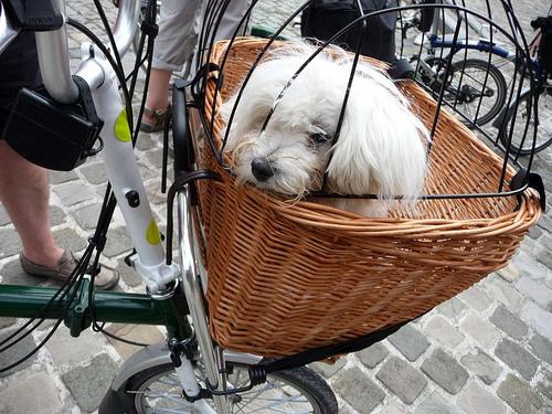 Comment transporter son chien sur son B? - Page 2 090715042047263594073142