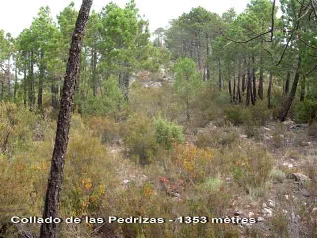Collado de las Pedrizas - ES-TE- 1353 mètres