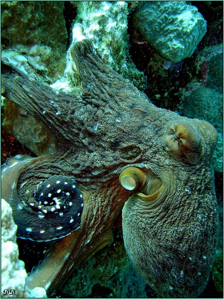 Plong e sous marine en mer rouge le forum des animaux for Faux poisson rouge