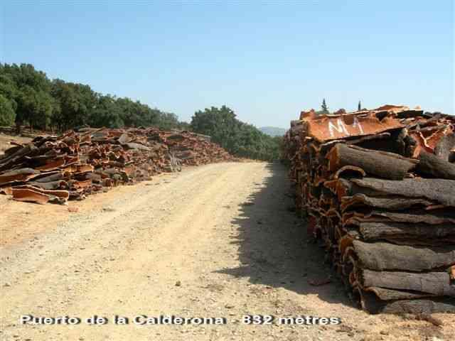 Puerto de la Calderona - ES-MA-0832