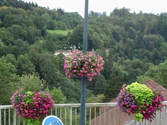Fleurissement  dans jardin 090830090144298824352308