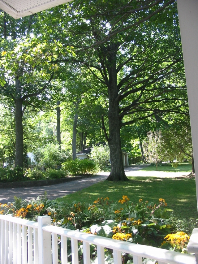 Mi casa, mi jardin... 090910070342764004423286