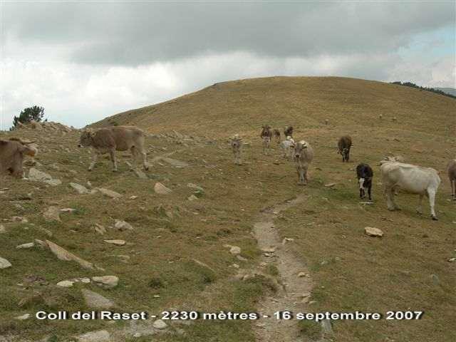 Coll de Raset - ES-L-2230