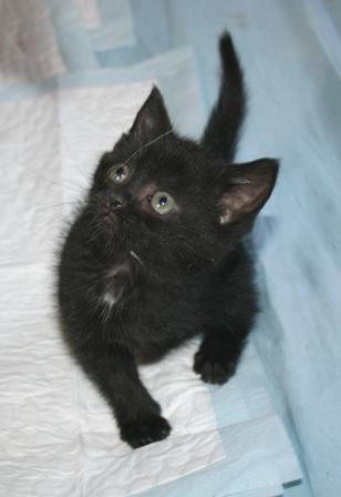 2 pauvres bebes chatons handicapées ( spa de douai)PHOTOS 09091911181136974484123