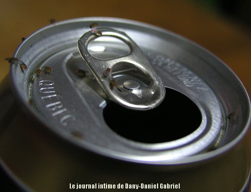 cannette biere mouche