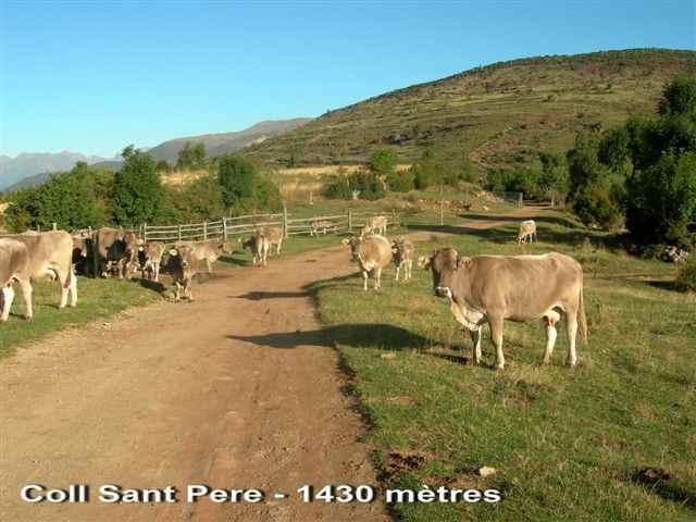 Coll de Sant Pere - ES-L-1430g