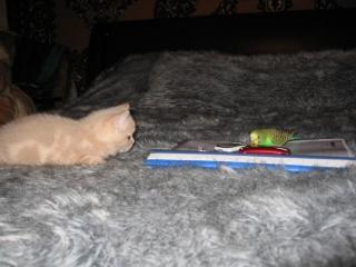 Le chat et l'oiseau !!!! dans chats(animaux) 091128040838298824951489