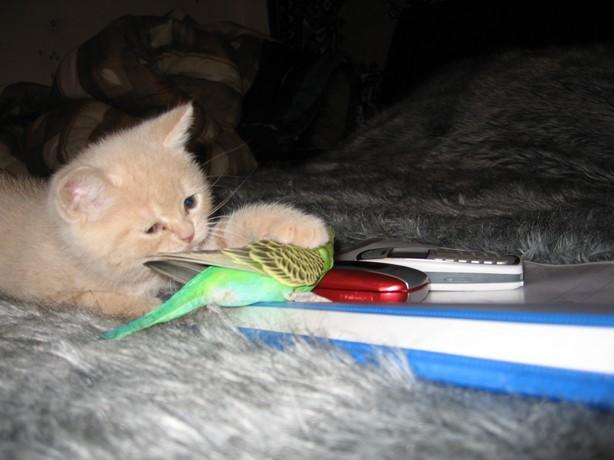 Le chaton et l'oiseau dans amitie 091202103004414244977215