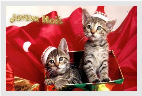 gifs Noël 091206083717728925005927