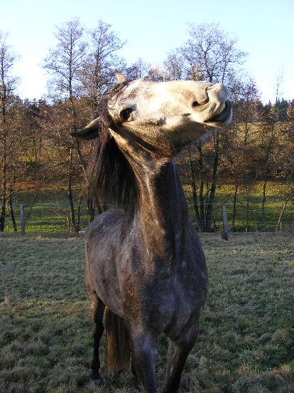 Vos grimaces 3 forum cheval for Change vos fenetre cas par cas