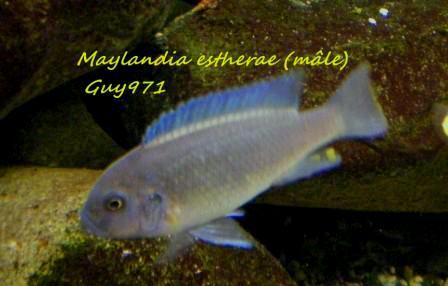 mon 250 litres Malawi (guy971) 100110013216827945221434