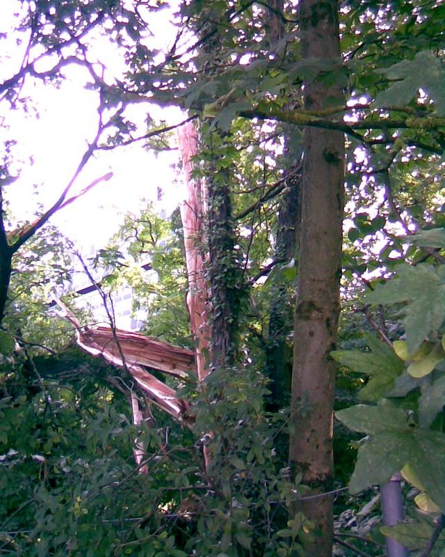 2007 : L'arbre foudroyé 100121120112185825284959