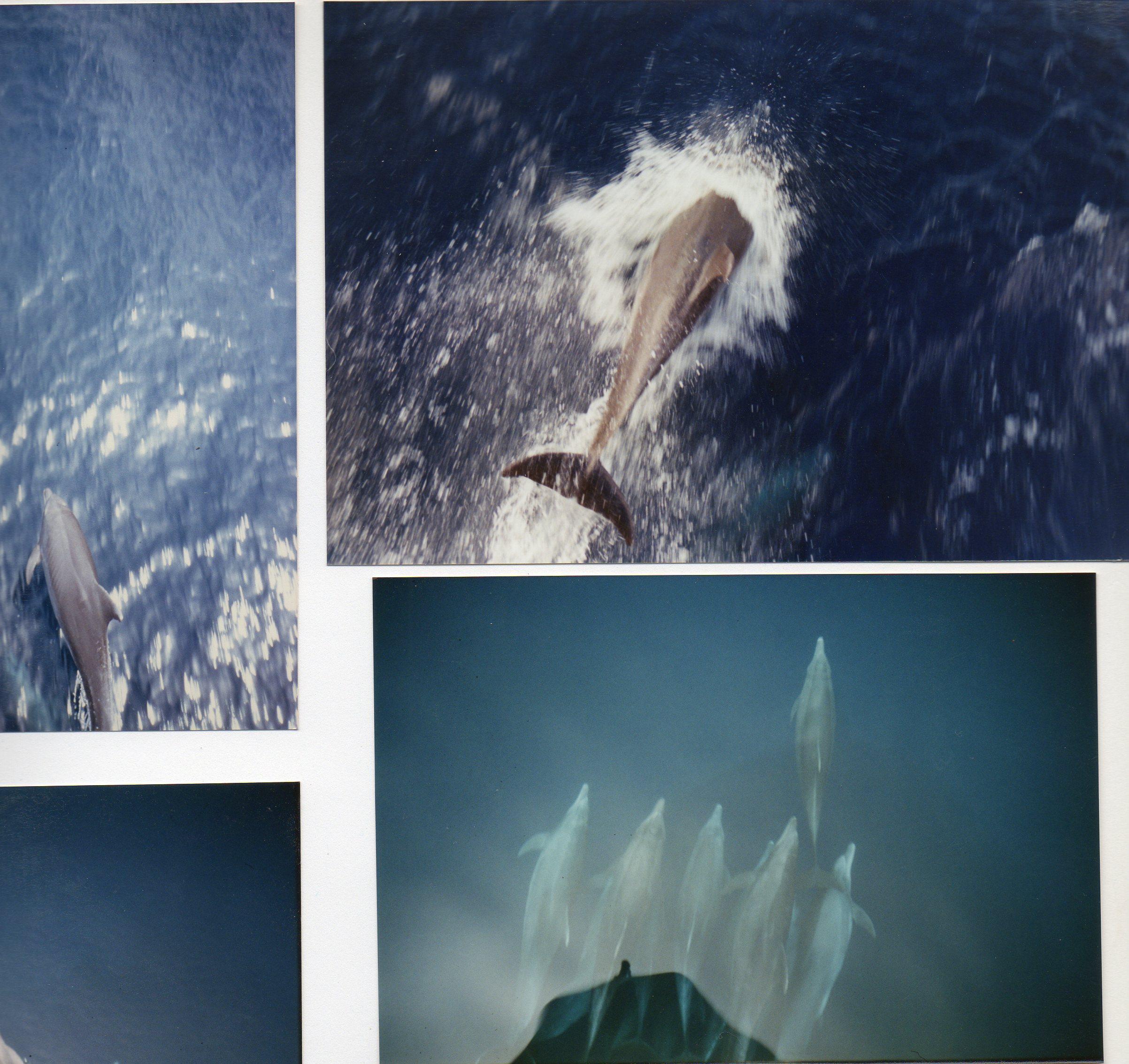 GODETIA - voyage en Afrique (09/01 au 09/03/1989) 100209090056980575409035