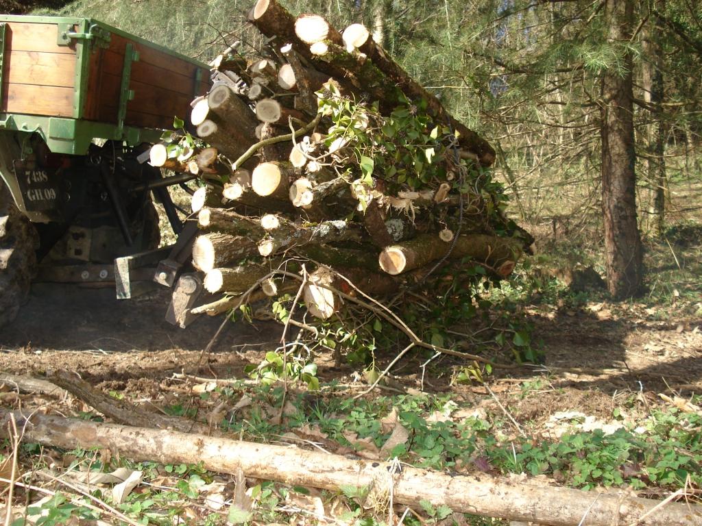 unimog mb-trac wf-trac pour utilisation forestière dans le monde - Page 2 10021808345745865470868